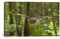 Tawny Owl in Flight, Canvas Print