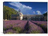 Lavender Fields in France, Canvas Print