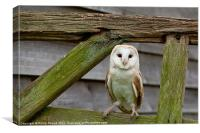 Barn Owl on Wooden Gate, Canvas Print