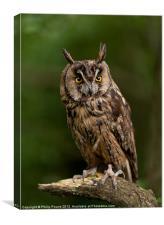 Long Eared Owl, Canvas Print