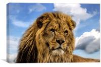 Lion Portrait, Canvas Print