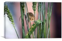 Harvest Mouse in Grass, Canvas Print