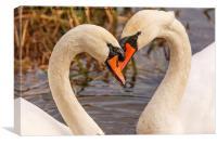 Mute Swans Heart , Canvas Print