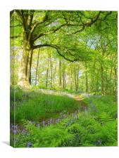 Evening walk in the bluebell wood, Canvas Print