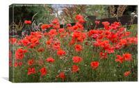 A host of . . . poppies , Canvas Print