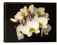 White Orchid Flowers, Canvas Print