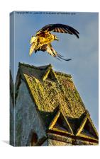 Red Kite Rising, Canvas Print