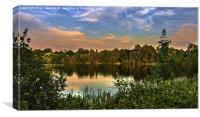 Sunset At Black Swan Lake, Canvas Print
