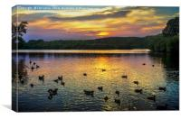 Sunset Over Black Swan Lake, Canvas Print