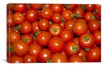 tomatoes aplenty, Canvas Print