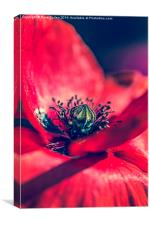 Heart of a Poppy, Canvas Print