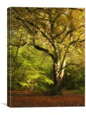 Autumn in Salcey Forest, Canvas Print