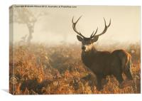 Stag in the Mist, Canvas Print