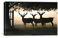 Stags In Silhouette, Canvas Print
