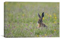 Hare In The Meadow, Canvas Print