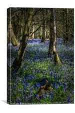 Blubells On The Surrey Hills, Canvas Print