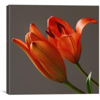 Lillies In Bloom, Canvas Print