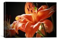 Lillies, Canvas Print