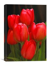 Tulip Bunch, Canvas Print