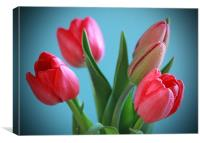 Blue Background Tulips, Canvas Print