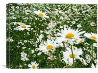 The Recurring Daisy, Canvas Print