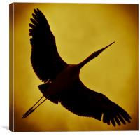 Painted stork, Canvas Print