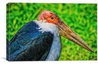 Marabou Stork, Canvas Print