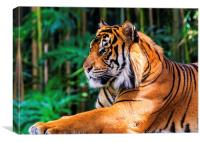 Regal Tiger, Canvas Print