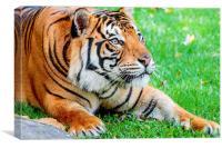 Pre-pounce Tiger, Canvas Print