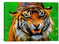 Growling Tiger, Canvas Print