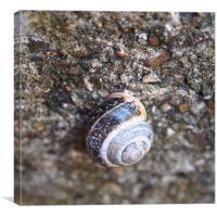 Snail on Stones, Canvas Print