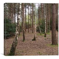 Through The Trees, Canvas Print