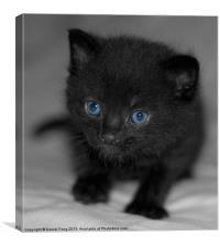 Cute pure black kitten, Canvas Print
