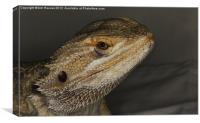 bearded dragon, Canvas Print