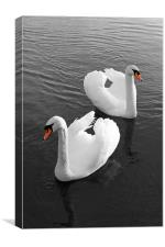 Swans at Gartmorn, Canvas Print