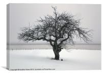 Maitland Tree, Canvas Print