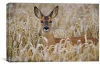 ROE DEER, Canvas Print