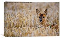 Roe Deer, Canvas Print