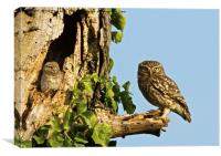 Little Owl Looking For Mum, Canvas Print