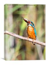 Kingfisher With His Fish, Canvas Print