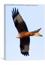 Red Kite 1, Canvas Print
