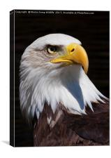 Bald Eagle 2, Canvas Print