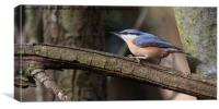 Nuthatch, Canvas Print