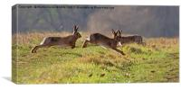 March Hare's, Canvas Print
