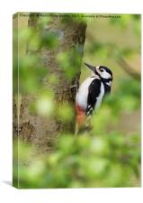 Woodpecker in the Leaves, Canvas Print