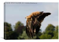 Eagle 2, Canvas Print