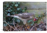 Sparrowhawk with Mouse  , Canvas Print