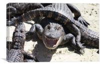 Angry Alligator, Canvas Print