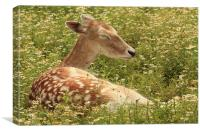 Deer in the Daisies, Canvas Print