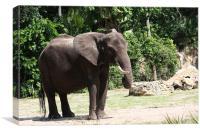 Elephant, Canvas Print
